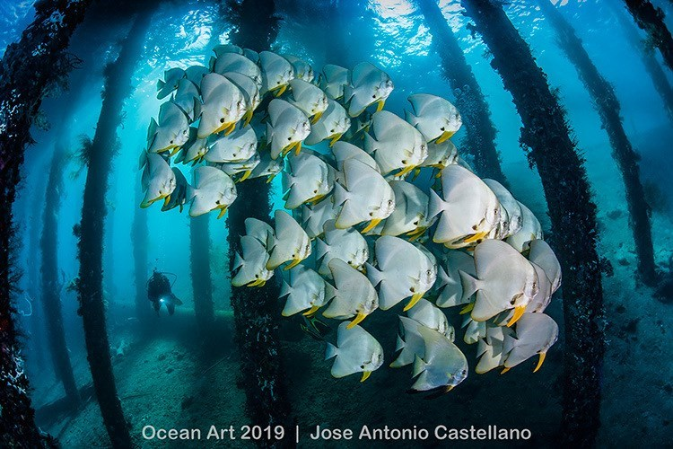 Marine biology - Ocean Art 2019 | Jose Antonio Castellano