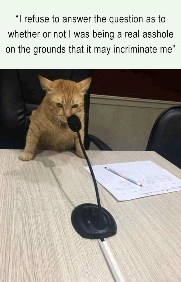 orange cat leaning on a table speaking into a mic: i refuse to answer the question as to whether or not i was being a rel asshole on the grounds that it may incriminate me