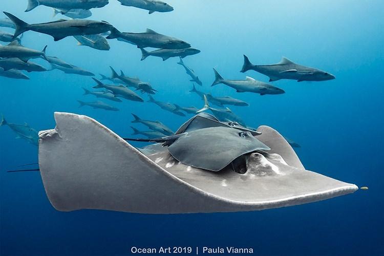 Fish - Ocean Art 2019   Paula Vianna