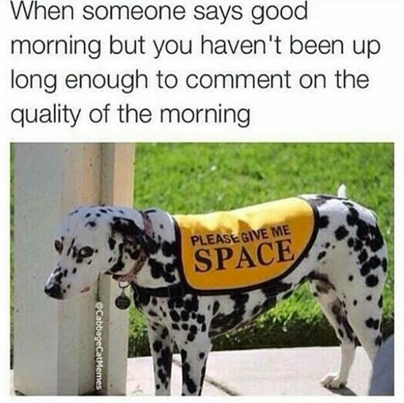 Dalmatian - When someone says good morning but you haven't been up long enough to comment on the quality of the morning PLEASE GIVE ME SPACE eCabbageCatMemes
