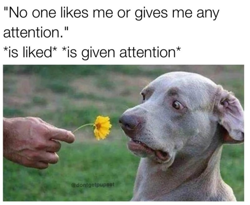 """Dog - """"No one likes me or gives me any attention."""" *is liked* *is given attention* @dontgetpupset"""