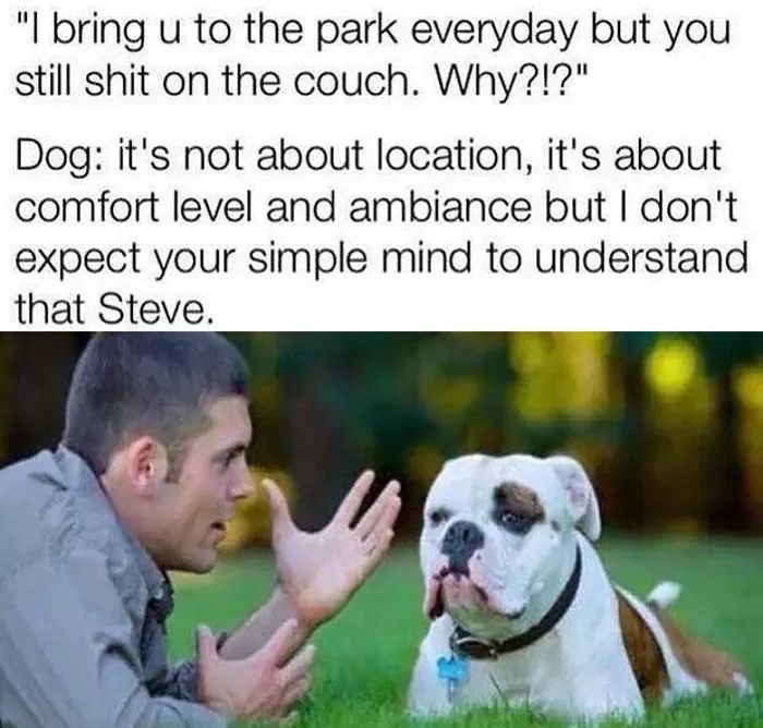 """Dog breed - """"I bring u to the park everyday but you still shit on the couch. Why?!?"""" Dog: it's not about location, it's about comfort level and ambiance but I don't expect your simple mind to understand that Steve."""