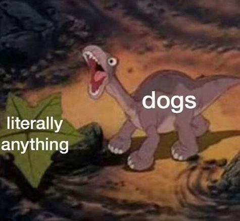 Dinosaur - dogs literally anything