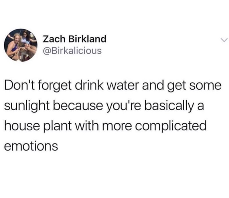 Text - Zach Birkland @Birkalicious Don't forget drink water and get some sunlight because you're basically a house plant with more complicated emotions