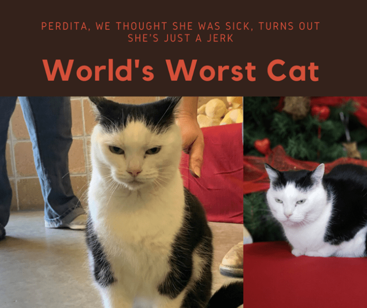 Cat - PERDITA, WE THOUGHT SHE WAS SICK, TURNS OUT SHE'S JUSTA JERK World's Worst Cat