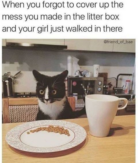 Cat - When you forgot to cover up the mess you made in the litter box and your girl just walked in there @friend of bae