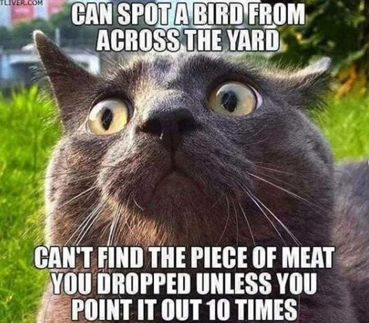 Cat - CAN SPOTABIRD FROM TLIVER.COM ACROSS THE YARD CAN'T FIND THE PIECE OF MEAT YOU DROPPED UNLESS YOU POINT IT OUT 1O TIMES