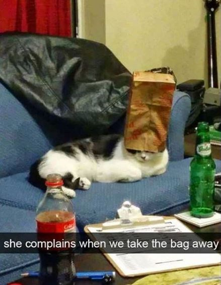 Photography - she complains when we take the bag away