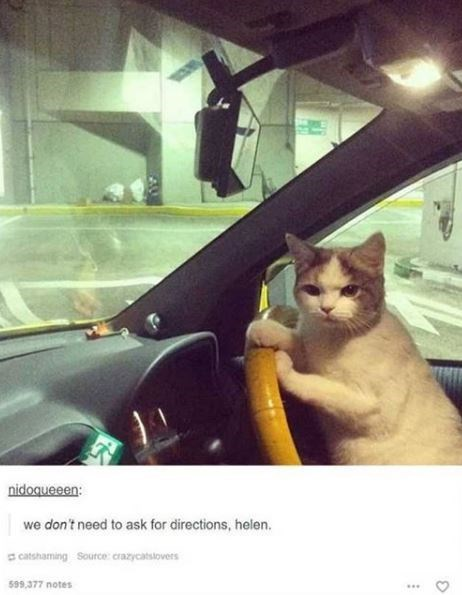 Cat - nidoqueeen: we don't need to ask for directions, helen. a catshaming Source: crazycatstovers 599,377 notes