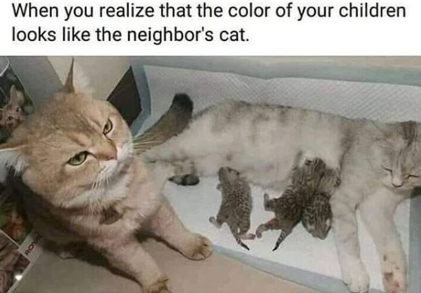 Cat - When you realize that the color of your children looks like the neighbor's cat.
