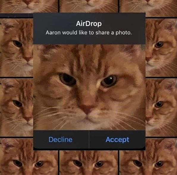 Cat - AirDrop Aaron would like to share a photo. Decline Accept
