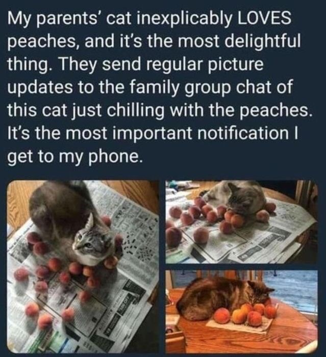 Organism - My parents' cat inexplicably LOVES peaches, and it's the most delightful thing. They send regular picture updates to the family group chat of this cat just chilling with the peaches. It's the most important notification I get to my phone.