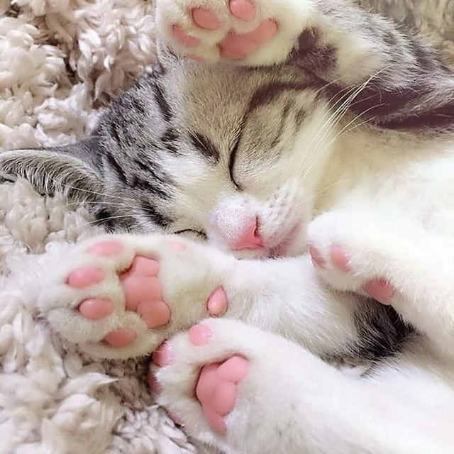cute kitten sleeping pink paws cat beans jellybeans