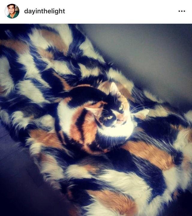 Fur - dayinthelight