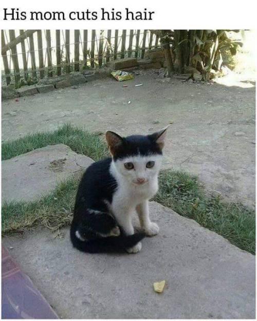Cat - His mom cuts his hair