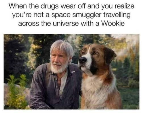 Dog - When the drugs wear off and you realize you're not a space smuggler travelling across the universe with a Wookie
