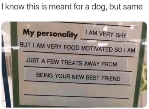 Text - I know this is meant for a dog, but same I AM VERY SHY My personality BUT I AM VERY FOOD MOTIVATED SO I AM JUST A FEW TREATS AWAY FROM BEING YOUR NEW BEST FRIEND