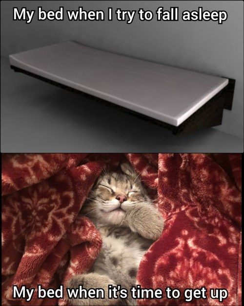 Cat - My bed when I try to fall asleep My bed when it's time to get up
