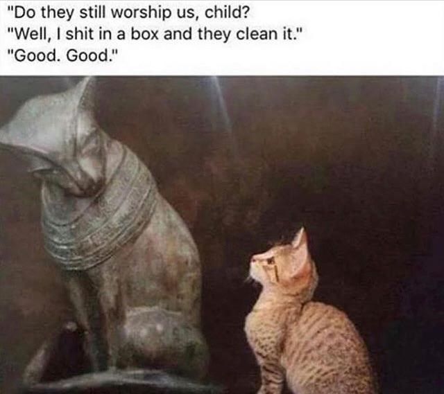 """Cat - """"Do they still worship us, child? """"Well, I shit in a box and they clean it."""" """"Good. Good."""""""