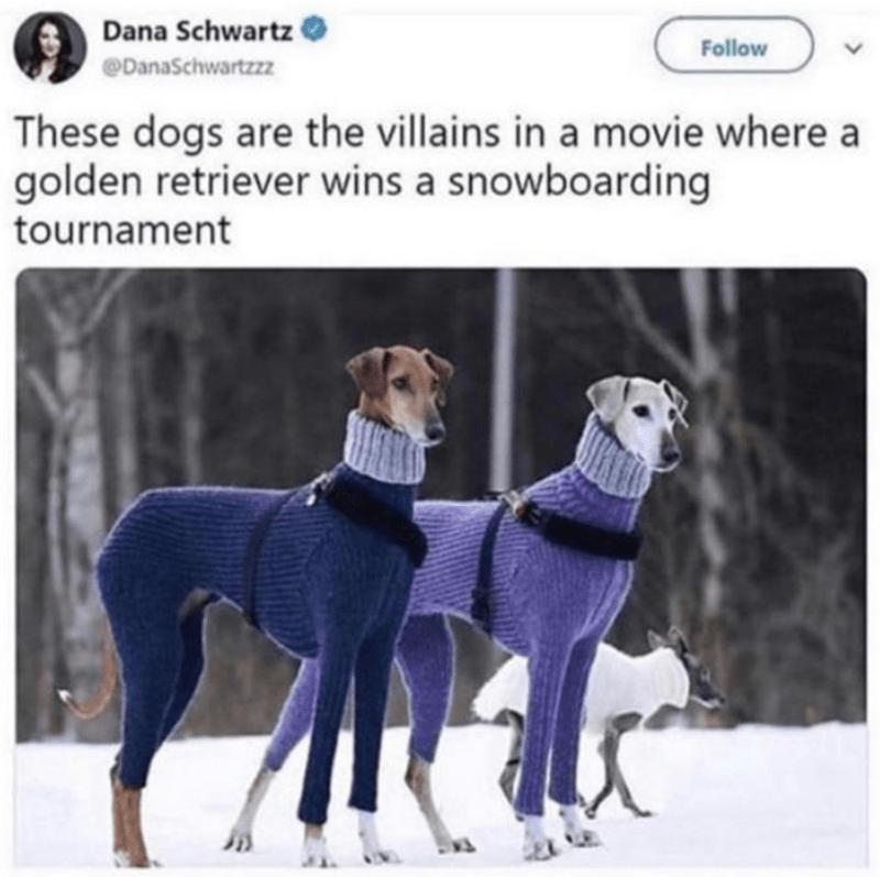 Dog - Dana Schwartz Follow @DanaSchwartzzz These dogs are the villains in a movie where a golden retriever wins a snowboarding tournament