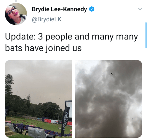 Text - Brydie Lee-Kennedy O @BrydieLK Update: 3 people and many many bats have joined us PLATINO