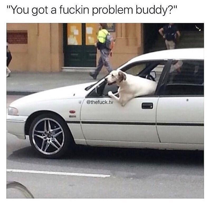 "Vehicle - ""You got a fuckin problem buddy?"" @thefuck.tv"