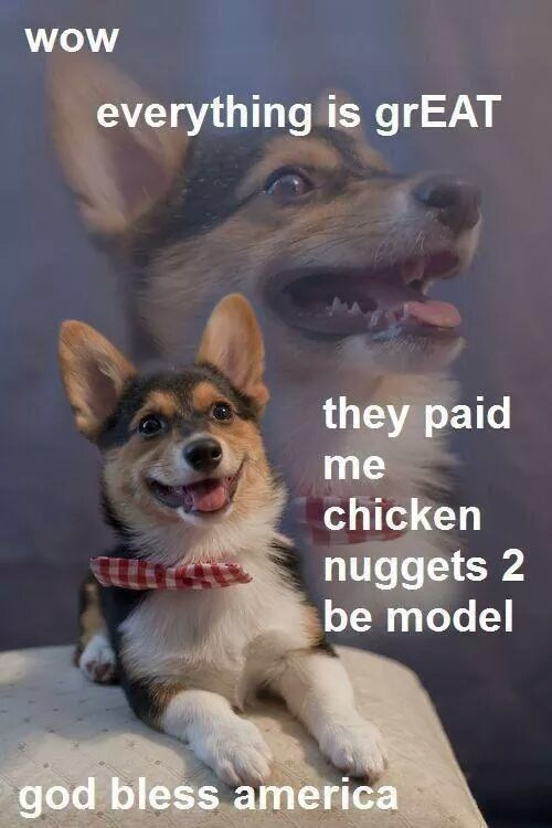 Dog - wow everything is grEAT they paid me chicken nuggets 2 be model god bless america