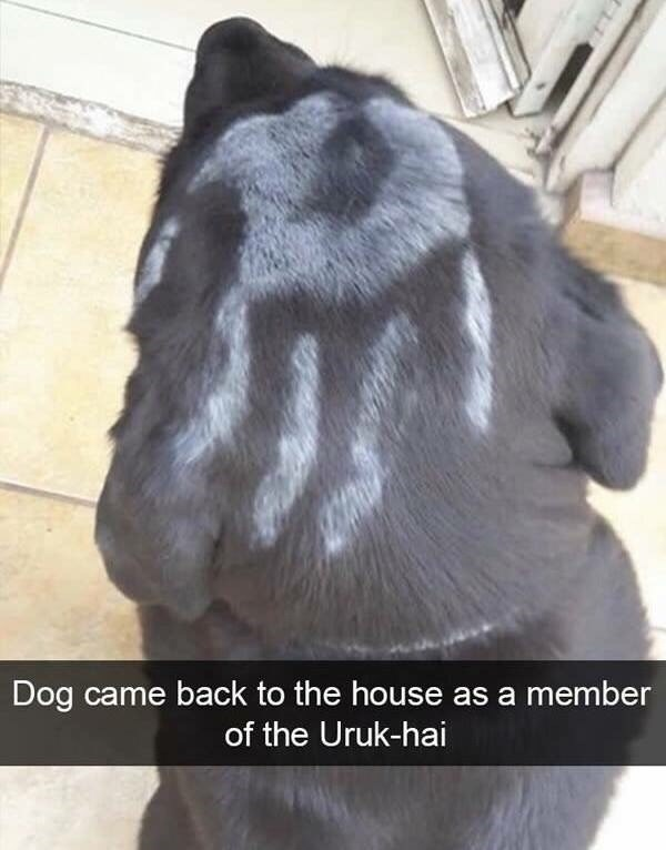 Fur - Dog came back to the house as a member of the Uruk-hai