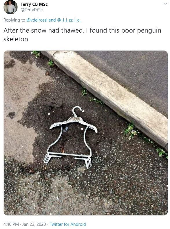 Text - Text - Terry CB MSc @TerryExSci Replying to @vdelrossi and @Li zz i_e After the snow had thawed, I found this poor penguin skeleton 4:40 PM - Jan 23, 2020 · Twitter for Android