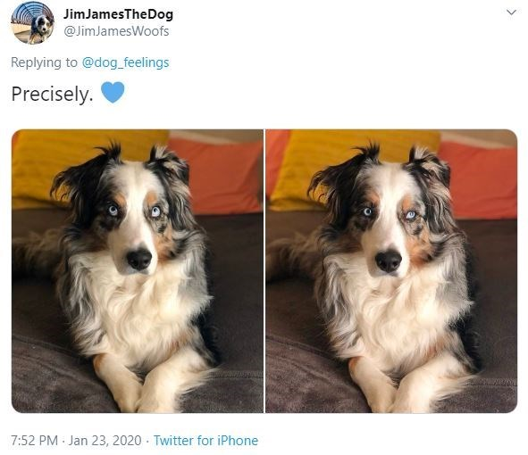 Dog - JimJamesTheDog @JimJamesWoofs Replying to @dog_feelings Precisely. 7:52 PM Jan 23, 2020 · Twitter for iPhone