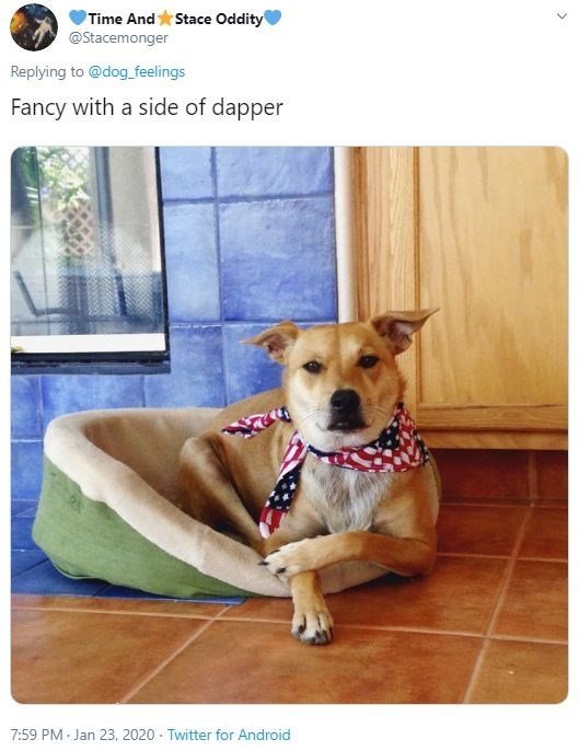 Dog - Time And Stace Oddity @Stacemonger Replying to @dog_feelings Fancy with a side of dapper 7:59 PM Jan 23, 2020 · Twitter for Android