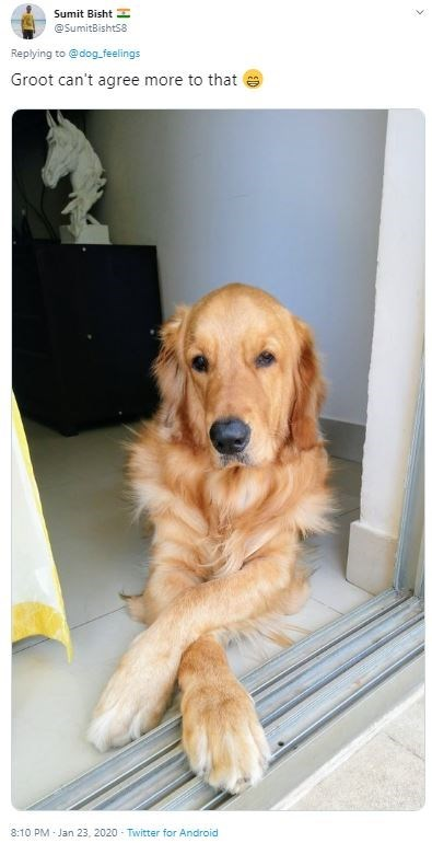 Dog - Sumit Bisht H @SumitBishts8 Replying to @dog_feelings Groot can't agree more to that 8:10 PM - Jan 23, 2020 - Twitter for Android