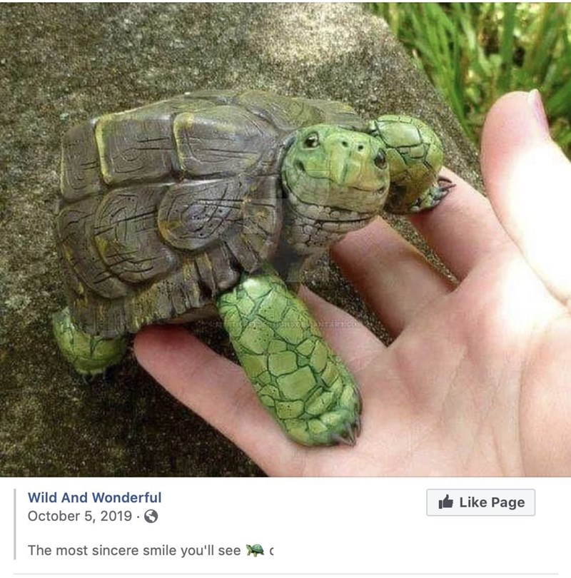Tortoise - Wild And Wonderful IL Like Page October 5, 2019 · 6 The most sincere smile you'll see c