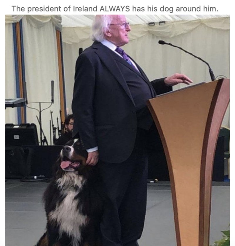 Dog - The president of Ireland ALWAYS has his dog around him.