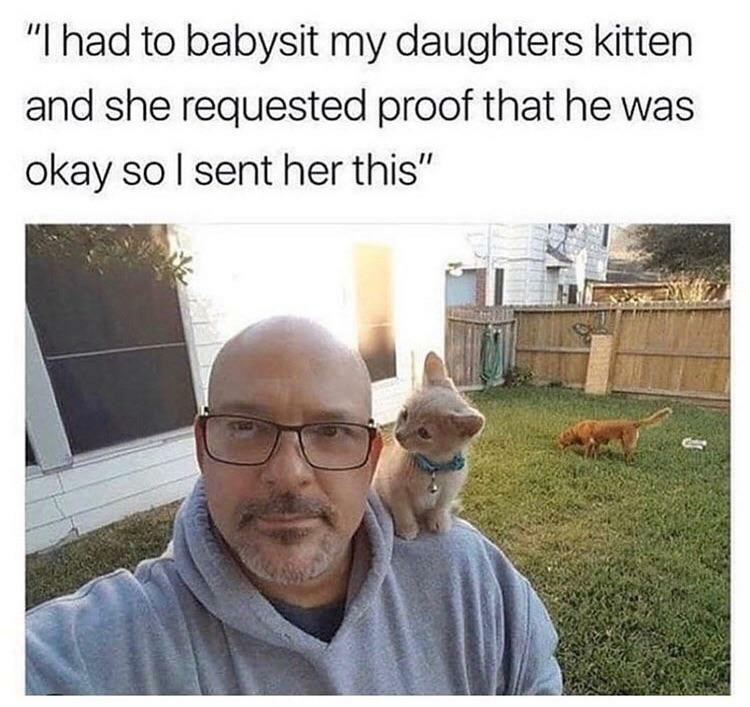 "Text - ""I had to babysit my daughters kitten and she requested proof that he was okay so l sent her this"""