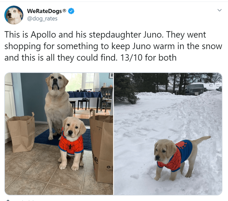 Dog - WeRateDogs ® @dog_rates This is Apollo and his stepdaughter Juno. They went shopping for something to keep Juno warm in the snow and this is all they could find. 13/10 for both