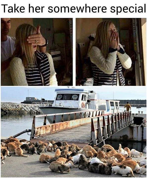 take her somewhere special photos of a man covering a woman's eyes then of the same woman looking shocked with her hands over her mouth. bottom photo is of a dock surrounded by many cats