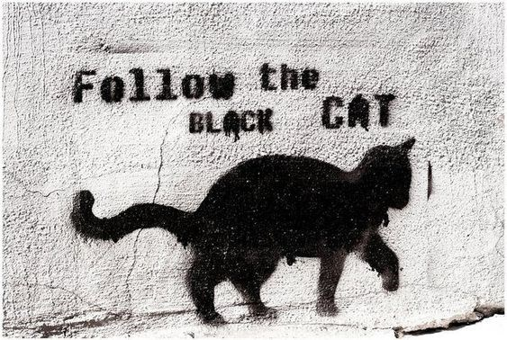 Black cat - Follow the BLACK CAT