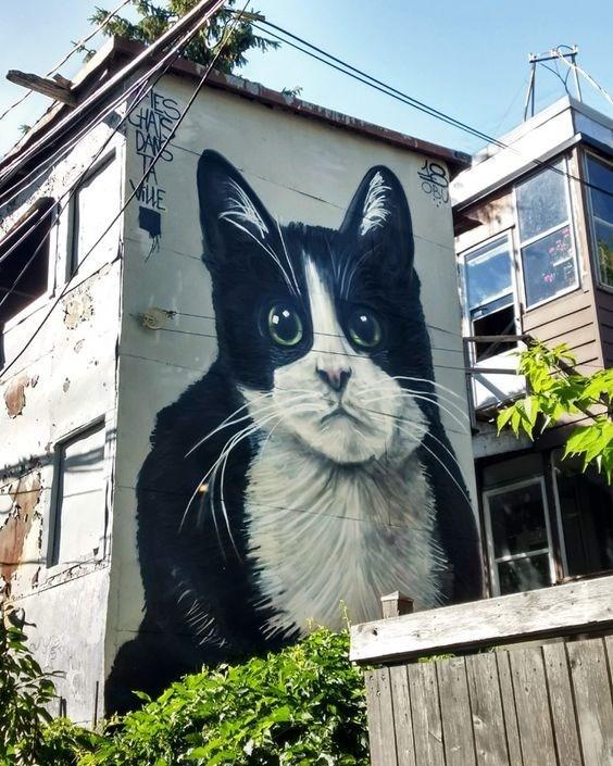 Cat - DAY ME