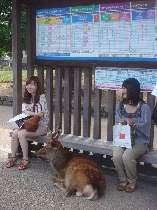 Zoo - Eouils 2s0n 34c asom comincirs.seo