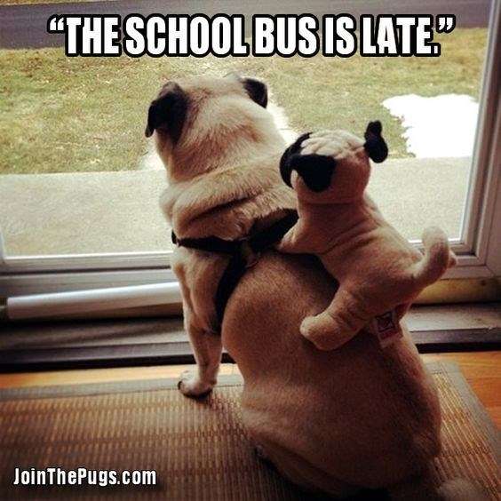 "Dog - ""THE SCHOOL BUS IS LATE"" JoinThePugs.com"