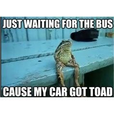 Sea turtle - JUST WAITING FOR THE BUS CAUSE MY CAR GOT TOAD