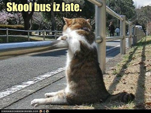 Cat - Skool bus iz late. ICANHASCHEEZBURGER.COM