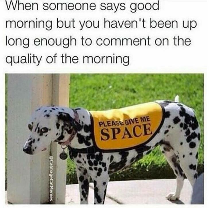 Dalmatian - When someone says good morning but you haven't been up long enough to comment on the quality of the morning PLEASEGIVE ME SPACE eCabbageCatMemes
