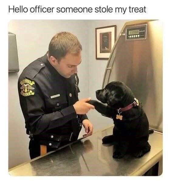 Dog - Hello officer someone stole my treat