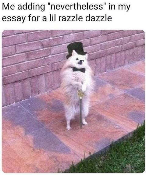 "Dog - Me adding ""nevertheless"" in my essay for a lil razzle dazzle"