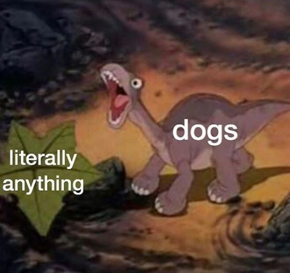 Cartoon - dogs literally anything