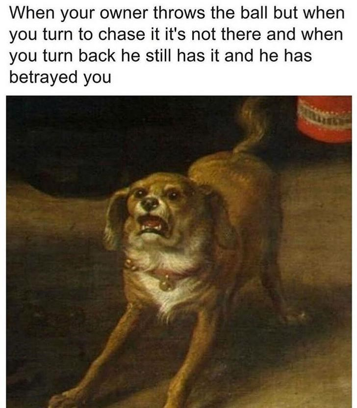 Dog - When your owner throws the ball but when you turn to chase it it's not there and when you turn back he still has it and he has betrayed you