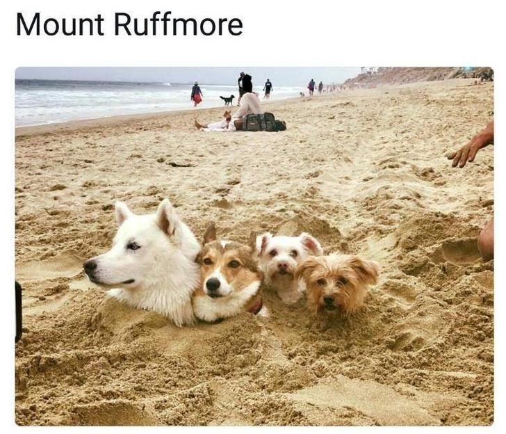 Dog - Mount Ruffmore