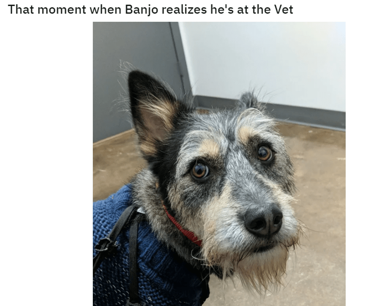 Dog - That moment when Banjo realizes he's at the Vet